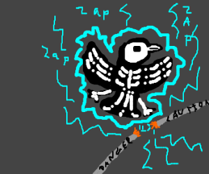A bird gets electrocuted