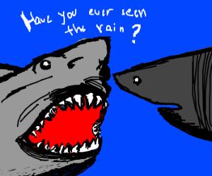 Sharks having a normal converstation