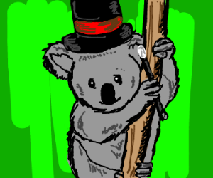 Koala magician looks knowingly at you.