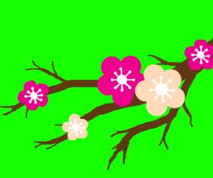Nice looking flowers on tree
