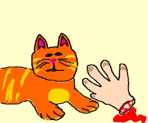 Orange cat severed a human hand