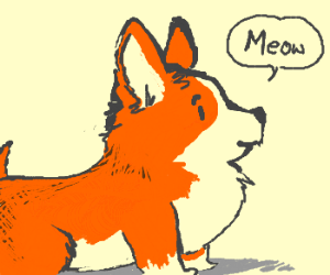 Dog beleives it is a cat