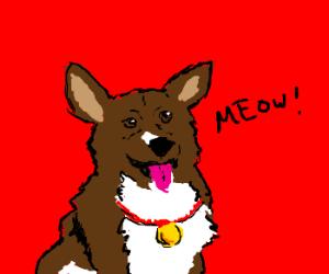 "corgi has serious identity issues- ""meow"""