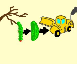 Caterpillar metamorphosis
