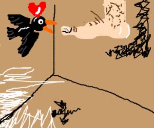 Bird loves a man's foot