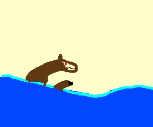 Seahorses at play