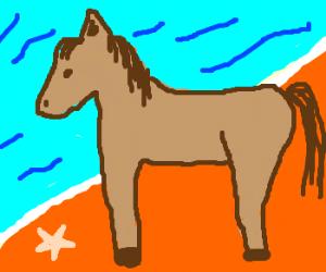 Ocean-going horse.
