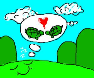 happy land dreams of turtle love