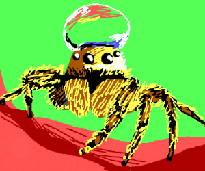 Realistic spider with dew drop on his head