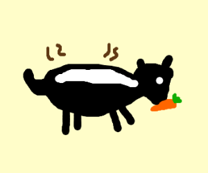 a skunk eating a carrot