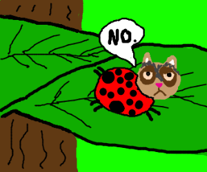 Grumpy cat ladybug