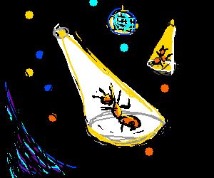 Disco Ants