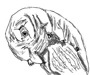 Tardigrade(aka water bear)