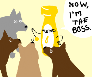 Dogs hypnotized by mustard