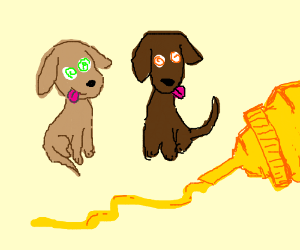 Two derpy dogs hypnotized by mustard