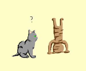 Cat questions another's headstand