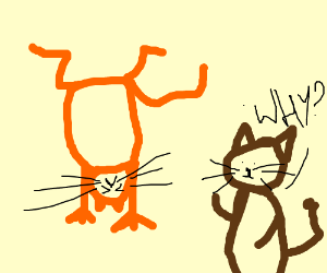 Cat doing a handstand, 2. cat wonders why
