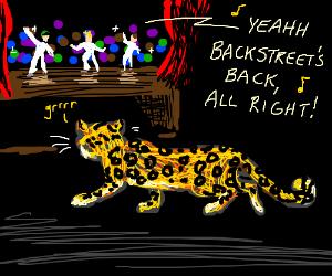 Backstreet Boy(s) stalked by Leopard