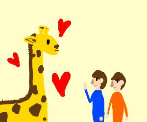 a giraffe loves people