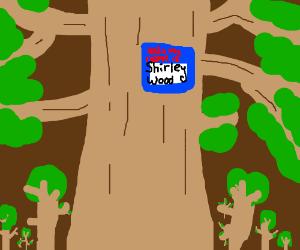 A tree named Shirley Wood.