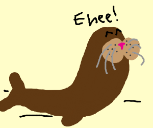 Walrus mmmmmm