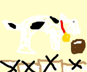 OMG!Cow-Cat drinks own milk.Dairies shut down!