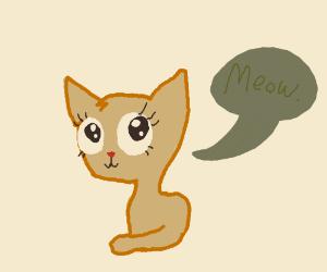 "Adorable kitty with big eyelashes says ""Meow."""