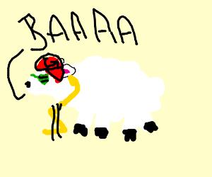 Sheep has swag