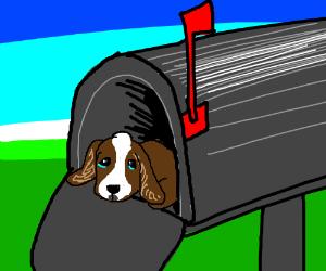 Sad puppy got put in the mailbox