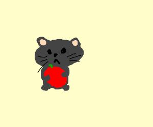 cat guy gets apple for halloween.