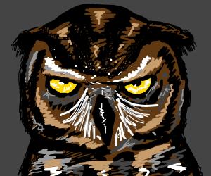Scowl owl