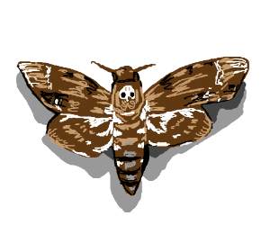 Its a Death's-head Hawkmoth!