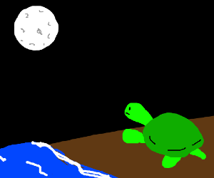 turtle stares longingly at the moon