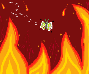 Moth in a firestorm