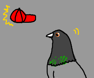 Pigeon concentrates sheer animal will on cap.