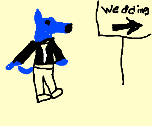 blue wolf dog in tux going to wedding