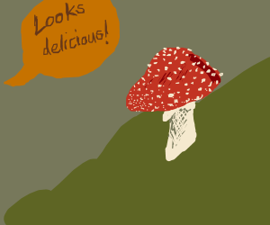 I sure hope that mushroom isn't poisonous