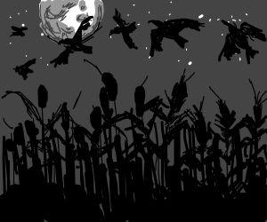 Murder of crows over cornfield by night