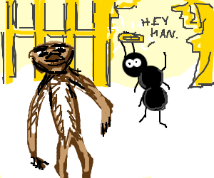 One eyed sloth meets the ant at the gate