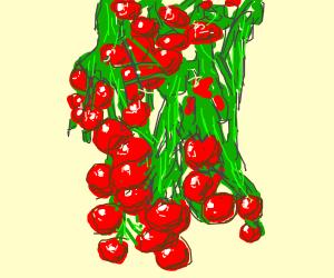 Grape Tomatoes on vine