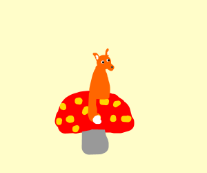 a fox on a poisonous mushroom