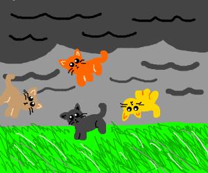 """It's raining cats!"""