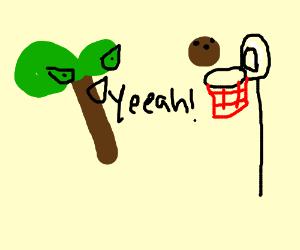 cocanut tree makes a slam dunk