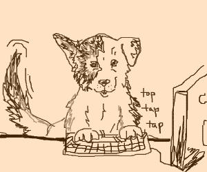 puppy types on keyboard