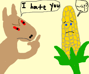 Dingos hate corn