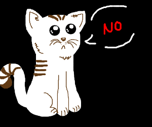 Brown and white cat says NO