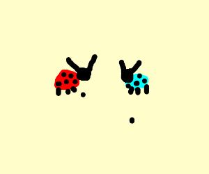 Ladybug with a torquoise bug