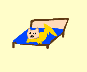 Dogechu in bed