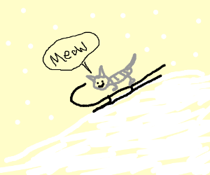 Cat sleds down snowy hill