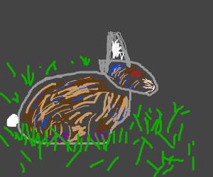 cybord rabbit